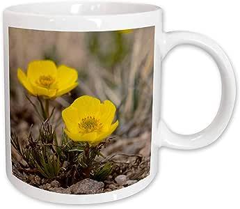 3dRose Snow Buttercup, Yellow Alpline Wildflower NA01 FZU0000 Frank Zurey Mug, 11-Ounce
