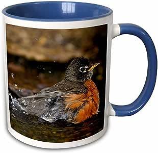 3dRose Danita Delimont - 鸟 - 美国罗宾,Turdus migratorius,沐浴,Marion Co. IL - 马克杯 蓝色 11 oz mug_205478_6