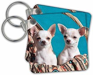 3dRose 吉娃娃小狗坐在篮子里,Mr - 钥匙链,2.25 英寸,2 个钥匙圈,6 厘米,不同