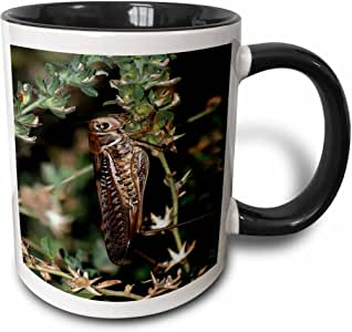 3drose taiche–摄影–locust–locust A 特写照片 OF A locust 或 grasshopper 有翼昆虫–马克杯 黑色/白色 11 oz