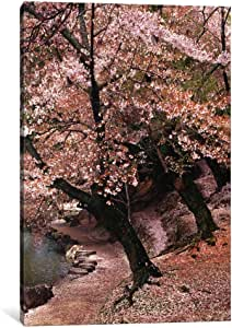 iCanvasART 7314-1PC3 Cherry Blossom Lane Canvas Print by Monte Nagler, 0.75 by 40 by 26-Inch