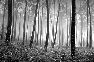 Photoinc 创作的 Star Creations 'In The Woods' 印刷绘画艺术品