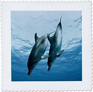 danita delimont–海豚–一对海豚–方块拼布