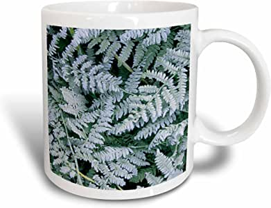 3drose danita delimont–查尔斯 gurche–FERNS–美国,华盛顿, JOHN A FINCH arboretum , bracken 蕨类植物与 FROST–马克杯 白色 11 oz