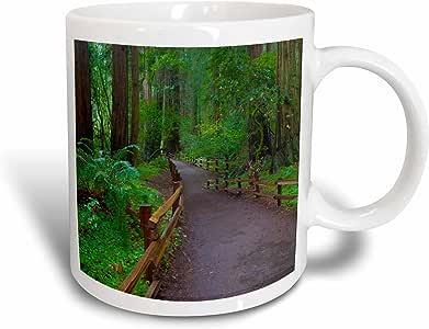 3drose danita delimont–安娜 Miller–trails–美国,加州 . PATH among redwoods IN muir Woods NM .–马克杯 白色 15盎司