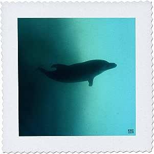 QS 10704kike CALVO 鲸鱼 N 海豚–bottlenose 海豚–方块拼布