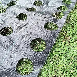 OriginA 除草面料配有 Ready Made 2 排种植孔 - 接地覆盖杂草屏障- 环保植物园景观,10.16 x 15.24 厘米,直径 15.24 厘米