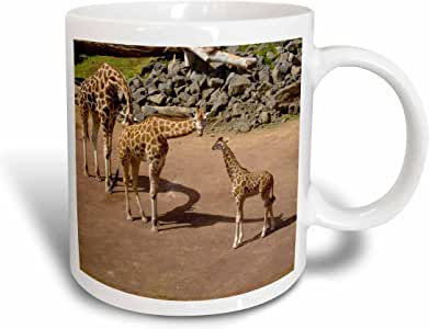 3dRose mug_22785_1 Giraffe Family with Baby Giraffe, Ceramic Mug, 11-Ounce