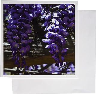 3dRose 贺卡,15.24 x 15.24 cm,6 片装,Wisteria 控木 (gc_127830_1)