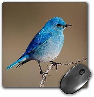 """3dRose mp_278073_1 8/8 英寸""""山蓝鸟""""鼠标垫 - 多色"""