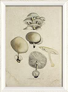 The Artwork Factory Mushroom II in White Ready to Hang Artwork