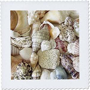 "3dRose qs_40854_1 Florida Seashells II Quilt Square, 10 by 10"""