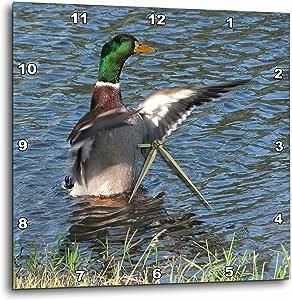 DPP 11537BEVERLY TURNER 摄影–Drake ,男性 mallard Duck–壁挂钟