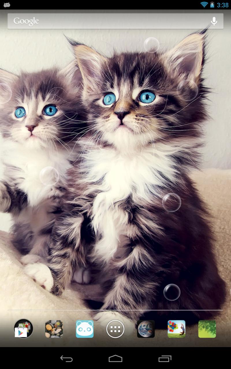 可爱猫咪动态壁纸