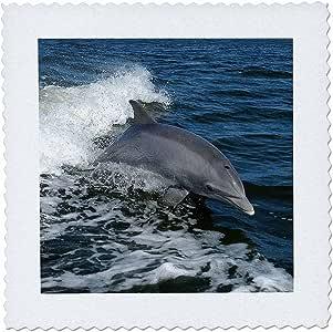 taiche–摄影–海豚–海豚 SPLASH–动物,蓝色,可爱,海豚,海豚,鱼, mammals–方块拼布