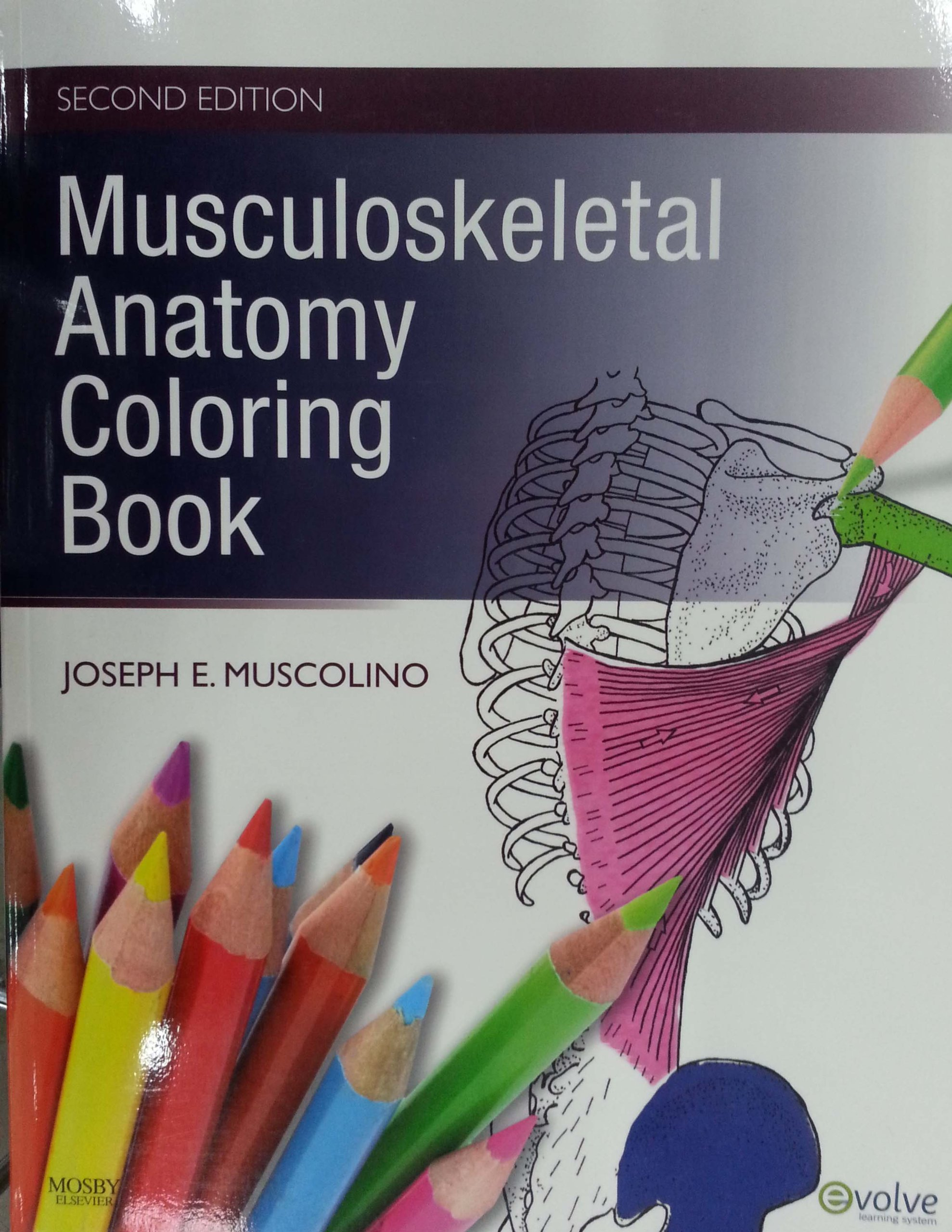 Free online anatomy coloring book - Musculoskeletal Anatomy Coloring Book Joseph E Muscolino Dc