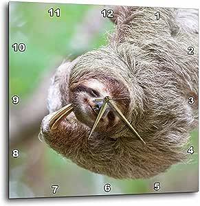danita delimont–野生动物–brown-throated 树懒野生动物, corcovado 哥斯达黎加–sa22jgs0017–JIM goldstein–壁挂钟