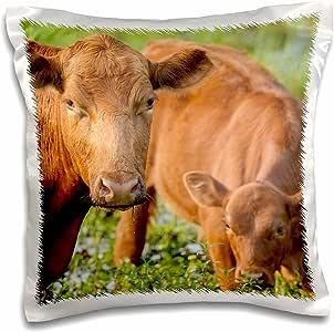 3D 玫瑰红天使牛和小牛饮用水来自邦佛罗里达枕套,40.64 厘米 x 40.64 厘米