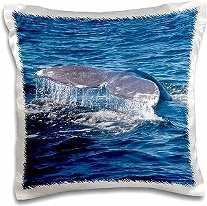 3drose danita delimont–加拿大–加拿大,环太平洋国家公园 RESERVE ,灰色鲸鱼 tail–枕套