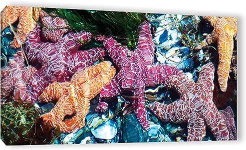 "ArtWall James Thompson's Seastar Pano Gallery Wrapped Canvas, 12"" x 24"""