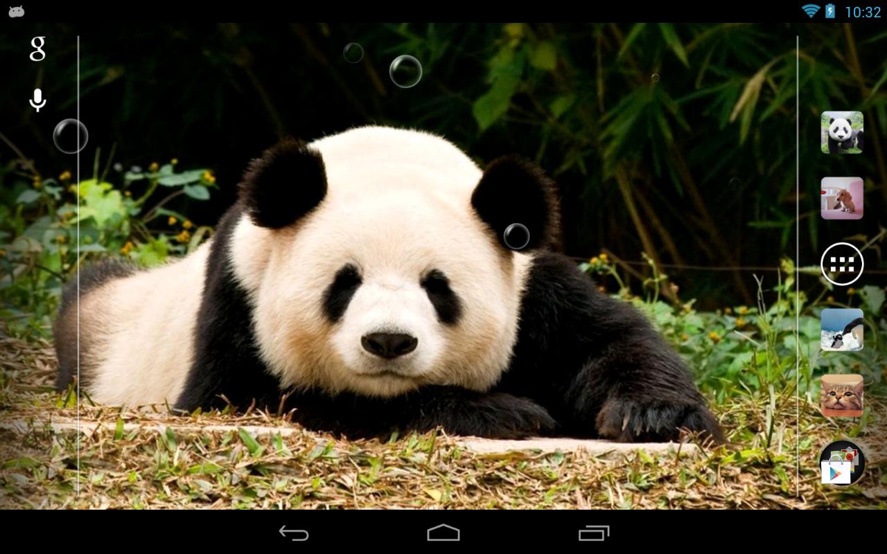 壁纸 大熊猫 动物 1280_800