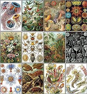 Ernst Birds and Alice 明信片(12 张装) (12-Pack) Ernst Haeckel Postcards (12-pack)