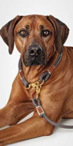Hund mit Halsung Sansibar Rantum und verstellbarer Führleine Sansibar Rantum von HUNTER