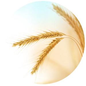 艾维诺 婴儿天然燕麦无香料保湿润肤霜