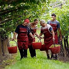 葡萄酒种植