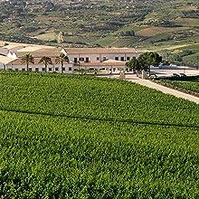 西西里产区